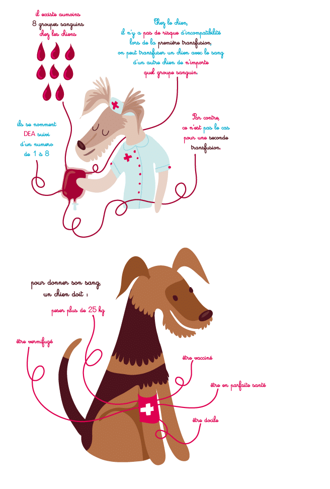 http://www.veteconsult.be/wp-content/uploads/2016/10/transfusion-chien.png