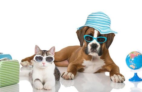 De bonnes vacances, aussi pour votre animal de compagnie !
